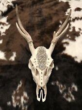 """Dalliance"" Real Deer Skull and Horns Original Art Sculpture Taxidermy"