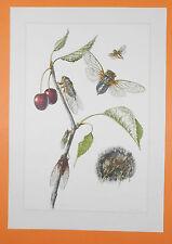 Salix jacchus-ohrweide-Salvia pascolo