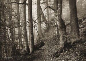 1949 Vintage JOSEF SUDEK Forest Tree Nature Landscape Original Photo Gravure Art