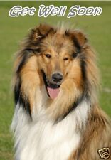 Rough Collie Get Well Soon Card by Starprint - No 1