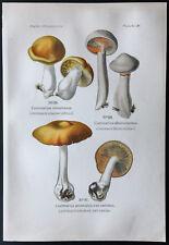 1891 - Planche couleur champignons : Cortinaire abricot ...
