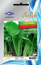 Brassica Chinensis choy plants with medicinal properties and nutritional value.