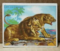 T29 Hassan Cigarettes Lion and Lioness Card (B-3)