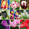 Big Bonsai Highgrade Seeds Plants Tulip Flores 19 Flower As Garden 100pcs/bag