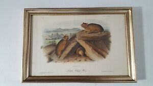 J J Audubon Print Little Chief Hare Plate LXXXIII No 17 JT Bowen Framed 1560