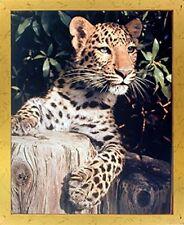Leopard (Panther, Jaguar, Big Cat) Wild Animal Wall Decor Golden Framed Picture