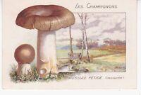 Chromo 232 Bon Point Les Champignons Russule Fétide Indigeste