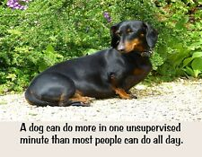 Metal Fridge Magnet Dachshund Dog Do More One Moment Than People All Day Humor