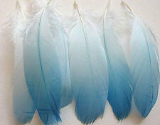Select Goose Shoulder Feathers - Light Blue Ombre