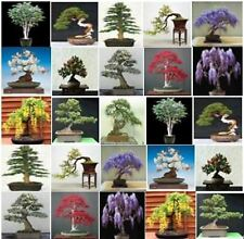 Collection of 150 x mixed tree seeds. Ideal for growing into bonsai trees!!