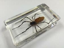 Real Spider Insect Specimens In Lucite Paperweight Acrylic Crafts