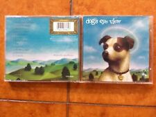 DOG'S EYE VIEW - DAISY