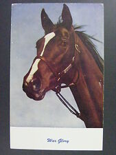 War Glory Thoroughbred Son Of Man O' War Horse Racing Vintage Postcard 1930s