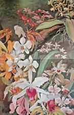 Orchids arranged in a greenhouse  ...Antique Chromolithograph....1908