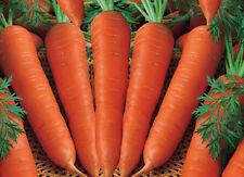 Zanahoria temprano Nantes 2-vegetal 100 mejores semillas-liveseeds