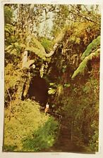THURSTON LAVA TUBE, HAWAII  508