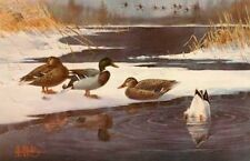 Mallards on Ice By Les Kouba SIgned and Numbered Duck Print