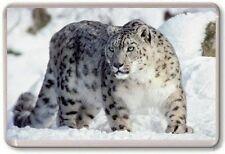 Snow Leopard Fridge Magnet 02