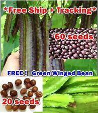 60 Seeds Purple Winged Bean Free 20X Green Thai Rare Herb Plant Cook Gardening