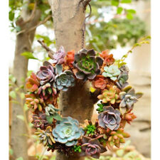 Iron Wire Wreath Stand Succulent Pot Metal Hanging Planter Plant Holder 21cm