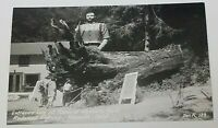 Entrance Log at Trees of Mystery Park Redwood Highway California RPPC Zan R139