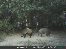 Texas Hog hunting for 2 days 1 night 110 miles south west of Fort Worth