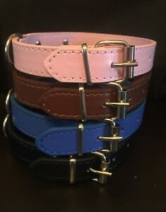 Bright, Colourful Dog Collars - Perfect treat for that special Pooch - FREE P&P