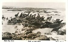 AUSTRALIA Victoria Philip Island Seals at Seal Rocks Real photo