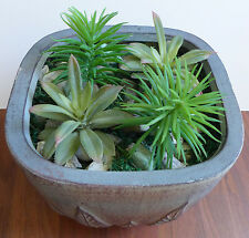 4 Artificial Mini Plants 2 Spiny Agave 2 Mini Pine Trees Desert Succulents Grass