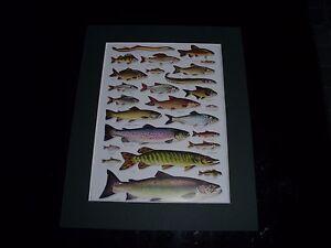 Fish Mounted Print