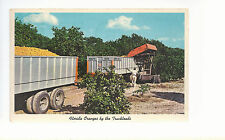Florida Oranges By The Truckload     Minute Maid Co Photo  Postcard 12313