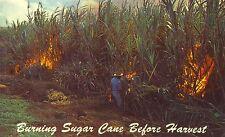 HAWAIIAN VIEWS of Burning Sugar Cane Fields Vintage Color Postcard 1951 Unposted