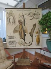 Rare vintage DOG FISH school chart by PAUL PFURTSCHELLER lithograph 1926-1953