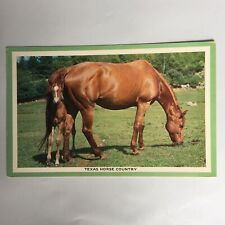 Texas Horse Country Unposted Postcard