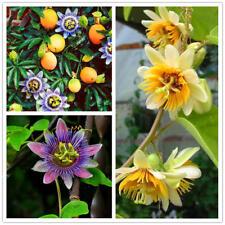 200PCS Passiflora Incarnata Seeds Home Garden Plants Passion Fruit Flower Bonsai