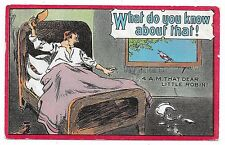 ANTIQUE COMIC POSTCARD MAN BED THROW SHOE BLUE BIRD ROBIN  WINDOW MORNING 1910