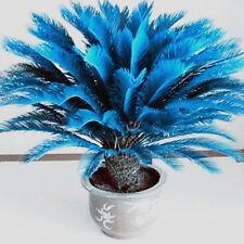 100 Pcs Blue Cycas Seeds Sago Palm Tree Seeds Bonsai Blower Home Garden Decor