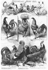 Spanish Fowl, Owl Pigeon, Cockerels, Dorking Fowl, Gamecock - Antique Print 1858