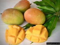 Mango Tropical Fruit Tree Plant (Kesington)