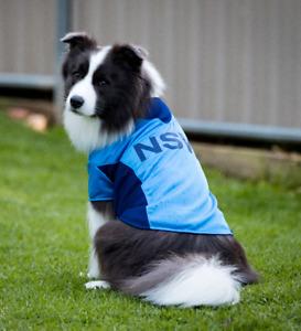 NSW Blues Rugby Dog Jersey shirt xxlarge 45cm - new