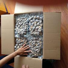 Magic Mushrooms Kit Spoers Dried Shiitake Mushrooms  Organic Foods 100g