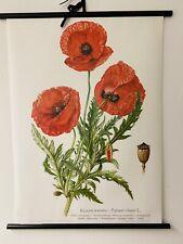 Klatschmohn Mohn Blume  Rollkarte Schulwandkarte 50 cm x 70 cm