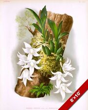 PAPHINIA CRISTATA ORCHID FLOWER OF TRINADAD PAINTING ART REAL CANVAS PRINT