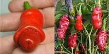 5 graines de Piment Penis (Peter Pepper) RARE - Légume potager
