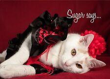 Sugar Says Fat Cat Model Inspirational Birthday Greeting Card Flamencol