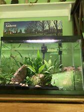 Huge Aquarium Plant Bundle - Every Plant In The Tank