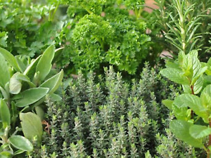 """Herb Seeds (Mixed) """"Approx 500 Seeds"""" Excellent Selection Of Herbs,Easy To Grow"""