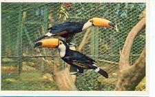 SAN DIEGO,CALIFORNIA-ANIMAL COLOR SERIES-TOCO TOUCAN-(BIRDS-475)