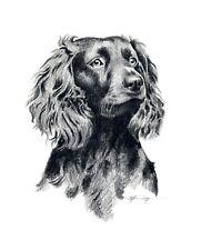 Boykin Spaniel Pencil 8 x 10 Dog Art Print by Artist Djr