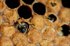 Poster, Many Sizes; Birth Of Black Bee In Hive 2